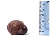 netsuke of a snail by yoshiharu