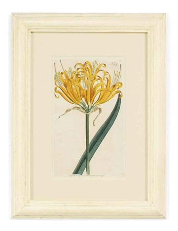 botanical 12 works by william curtis
