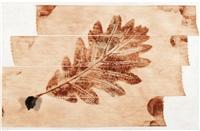 foglie del cervello - quercia by giuseppe penone