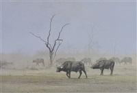 buffalo - dry season serondella by kim donaldson