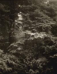 forest landscape by josef sudek