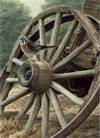 a kestrel perched on a cart-wheel by andrew hutchinson