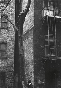new york (boys in tree) by helen levitt