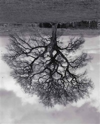 welsh oaks (no. 6) by rodney graham