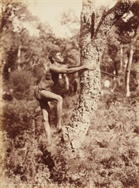 aborigènes allumant un feu et montant aux arbres, australie (2 works) by henry king