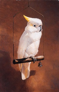 medium sulphur crested cockatoo by michael jackson