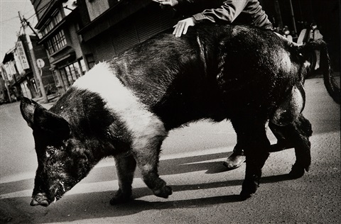 untitled by daido moriyama