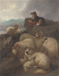 guarding the flock by john charles morris