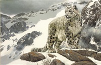 snow leopard in the himalayas by willem de beer