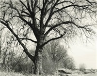 cottonwood, edge of development, longmont, colo. by robert adams