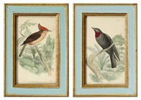 birds (set of 24) by william swainson