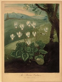 the persian cyclamen (from dr. thornton's temple of flora) by abraham pether