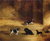 dogs outside kennels by george jackson