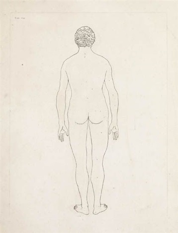 untitled 4 works from a comparitive anatomical exposition of the human body series by george stubbs