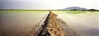 campos de arroz i by eduardo nave