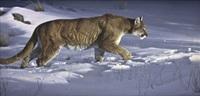 winter stalker by daniel smith
