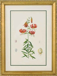 lillies (4 works) by lilian snelling