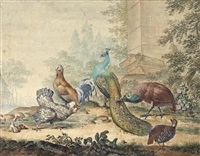 a peacock and peahen with other fowl in a yard by jabes heenck