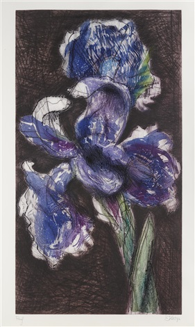 dutch iris ii by william kentridge