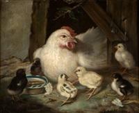gallina con polluelos by federico gimenez