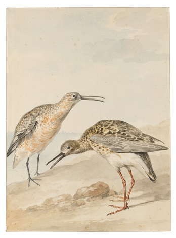 seashore birds including an oyster catcher a scoter a gull a great northern diver and a pair of redshanks 7 works by aert schouman