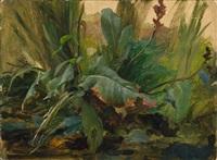 pflanzenstudie by josef selleny