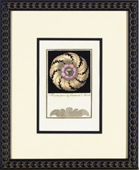architectural rosettes (6 works) by carlo antonini