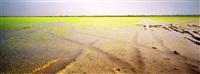 campos de arroz ii by eduardo nave
