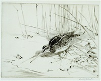 snipe by winifred marie louise austen