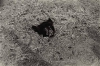 bear head on the ground by zoe leonard