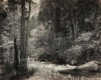 tenaya creek, dogwood, rain, yosemite national park, california (from portfolio iii) by ansel adams