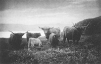 highland cattle by charles reid