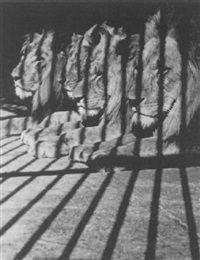 löwen by elisabeth hase