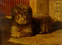 a tibetan terrier by bernard de gempt
