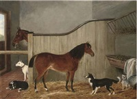 ponies and canine companions in a stable by j. quinton
