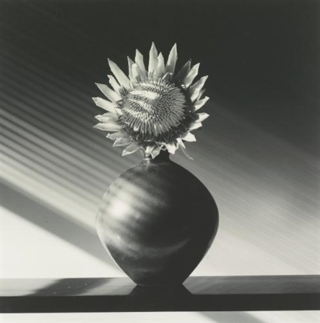 protea by robert mapplethorpe