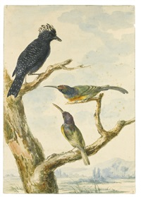 game and tropical birds including a pair of guinea fowl and a pair of hummingbirds on a branch (4 works) by aert schouman