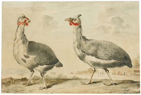 game and tropical birds including a pair of guinea fowl and a pair of hummingbirds on a branch 4 works by aert schouman