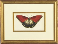 butterflies (7 works) by carl gustav jablonsky