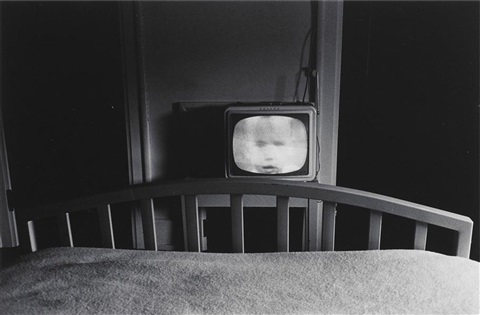 galax virginia by lee friedlander