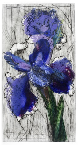 dutch iris by william kentridge