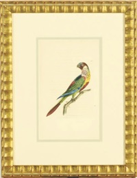 tropical birds (8 works) by richard polydore nodder