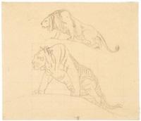 etude de tigre et lion by jean-léon gérôme
