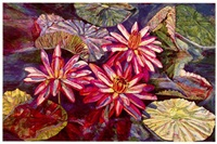 lily triangle by patricia tobacco forrester