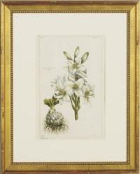 plant studies (6 works) by pierre bouchoz