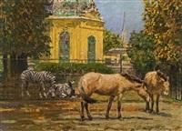 zebras und wildpferde in schönbrunn by stefan simony