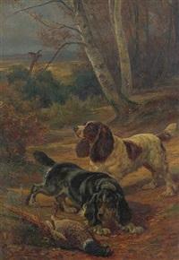 spaniels flushing a pheasant by charles h.d. boland de spa