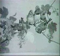 zebra finches by winifred austin