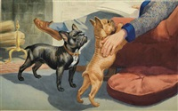 french bulldogs by walter alois weber
