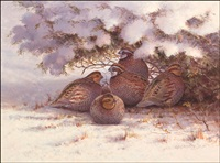 quail in winter by owen j. gromme